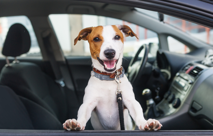 Pets can be a distraction to drivers